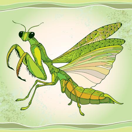 Mantis religiosa or Praying Mantis on the green textured background. Illustration