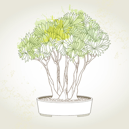 bonsai tree: Bonsai tree in round pot on the blots background. Traditional Japanese symbol Illustration