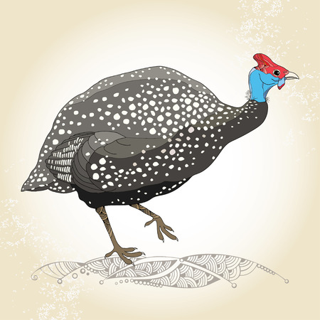 Guinea fowl on the textured beige background