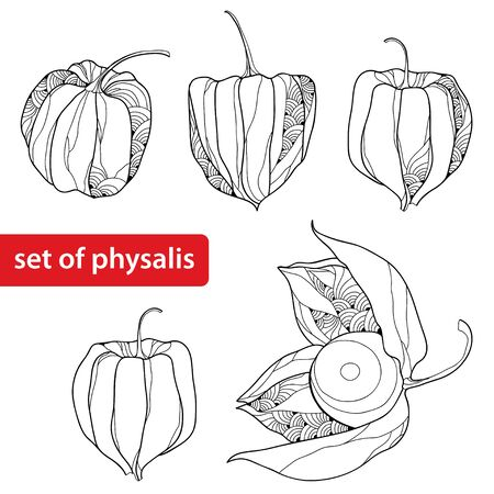 sepals: Set of the Physalis or Cape gooseberry isolated on white background Illustration