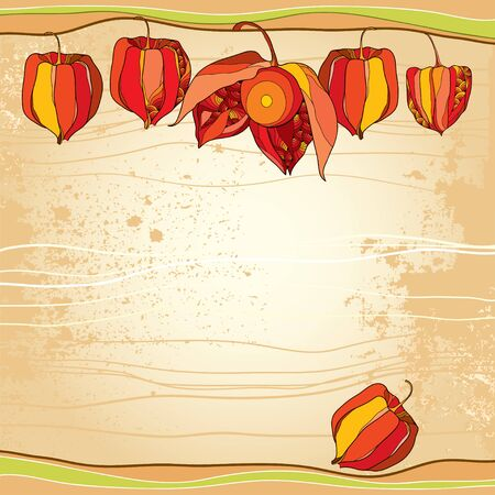 husk: Physalis or Cape gooseberry in orange and in red on the textured beige background. Decorative autumn background.