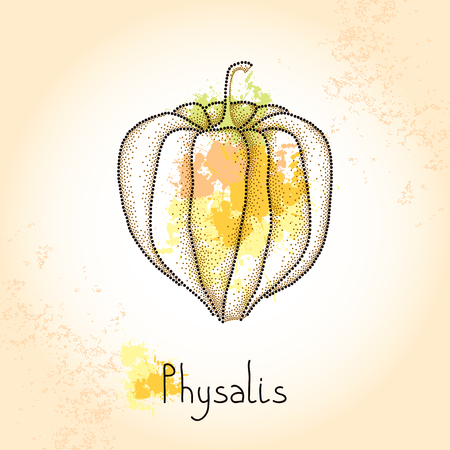 husk: Dotted Physalis or Cape gooseberry on the textured beige background