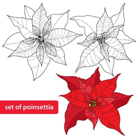 lijntekening: Set van Poinsettia bloem of Ster van Kerstmis op een witte achtergrond. Traditionele kerst symbool. Stock Illustratie
