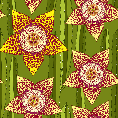 genus: Seamless pattern with Stapelia. Genus of low-growing stem succulent plants. Series of different succulents Illustration