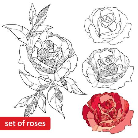 Set of rose flower isolated on white background 免版税图像 - 49753899