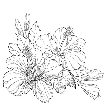 Bouquet with ornate Chinese Hibiscus or Hibiscus rosa-sinensis and leaves isolated on white background. Flower symbol of Hawaii. Illustration
