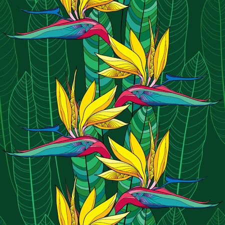ave del paraiso: Modelo inconsútil con los reginae del Strelitzia o ave del paraíso de flores y hojas adornadas en el fondo de color verde oscuro