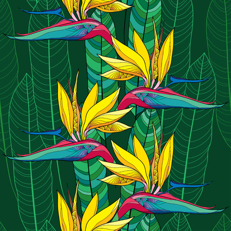 bird of paradise: Seamless pattern with Strelitzia reginae or bird of paradise flower and ornate leaves on the dark green background Illustration