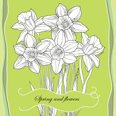 jonquil: Bouquet with ornate narcissus flower or daffodil on the green background. Greeting card with floral elements in contour style.