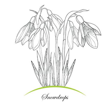 Boeket met sierlijke sneeuwklokje bloemen of Galanthus op een witte achtergrond. Bloemen elementen in contour stijl. Plant is het één van de lente symbolen.