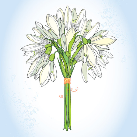 early: Bouquet with ornate Snowdrop or Galanthus in white on the light blue background. Floral elements in contour style. Early spring flowers.