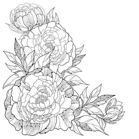 Boeket met sierlijke pioen bloemen en bladeren op een witte achtergrond. Bloemen elementen in contour stijl.