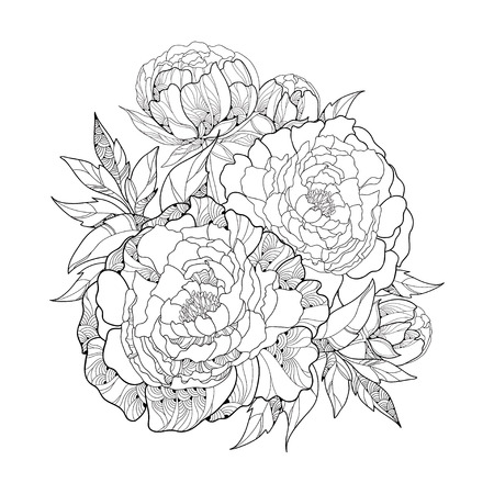 sepal: Round bouquet with five ornate peony flower and leaves isolated on white background. Floral elements in contour style.