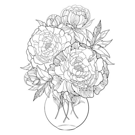 Bouquet with five ornate peony flower and leaves in the round transparent vase isolated on white background. Floral elements in contour style. Illustration
