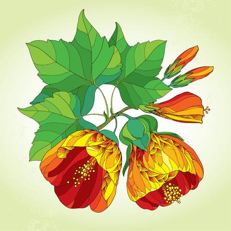 stamen: Stem with orange Abutilon flower, leaf and bud on the light green background. Illustration