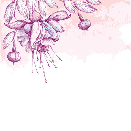 sepal: Fuchsia flower, leaves and buds on the textured background with blots in pastel colors. Greeting card with empty place for text. Hatching floral elements. Illustration