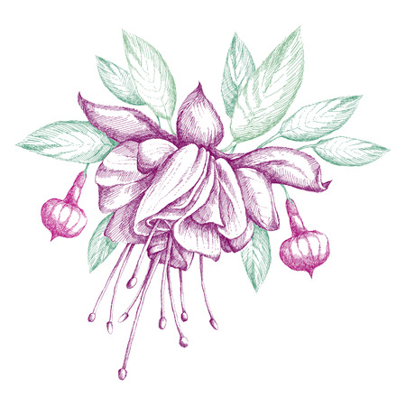 sepal: Sketch of Fuchsia flower, leaves and buds isolated on white background. Round composition with hatching floral elements. Illustration