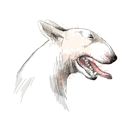 head profile: Vector sketch of Bull terrier dog head profile with open mouth isolated on white background with pastel blots.