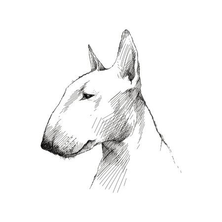 영어 불 테리어 강아지 머리 프로필 흰색 배경에 고립의 벡터 스케치.