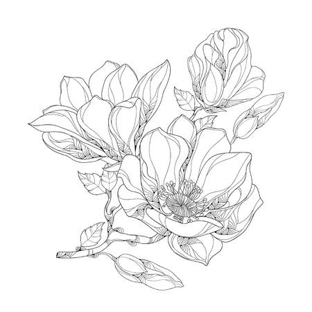 Stängel mit reich verzierten Magnolienblume, Knospen und Blätter auf weißem Hintergrund. Blumenelemente in der Kontur Stil.