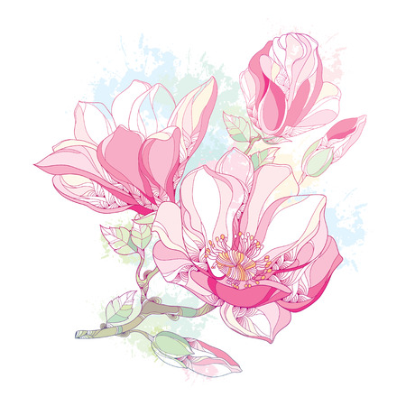 Stem with ornate magnolia flower and buds in pink isolated on white background with blots in pastel color. Floral elements in contour style.