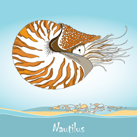 Vector illustration of Nautilus Pompilius or chambered nautilus on the blue background. Striped sea mollusk in contour style.