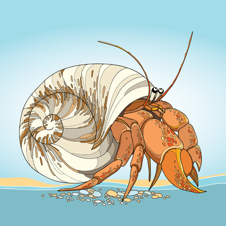Vector illustration of Hermit Crab in the round gastropod shell on the blue background. Underwater crustacean in contour style. Illustration