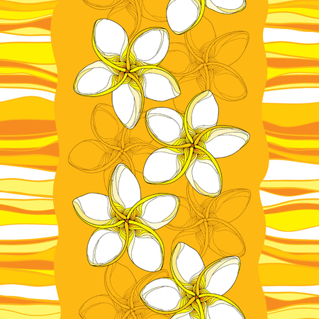frangipani flower: seamless pattern with Plumeria or Frangipani flower in yellow and stripes on the orange background. National flower of Laos and Bali. Floral background in contour style for summer design. Illustration
