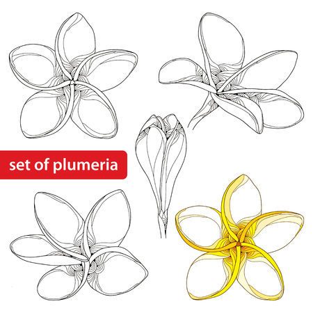 set with ornate Plumeria or Frangipani flower and bud in black and in color isolated on white background. National flower of Laos and Bali. Floral elements in contour style for summer design.