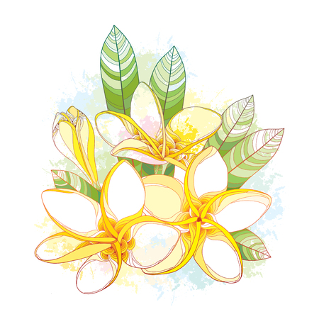 frangipani flower: Bouquet with ornate Plumeria or Frangipani flower, bud and leaves on the white background with blots in pastel color. National flower of Laos and Bali. floral elements in contour style for summer design.