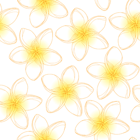 frangipani flower: seamless pattern with Plumeria or Frangipani flower in yellow on the white background. National flower of Laos and Bali. Floral background in contour style for summer design.
