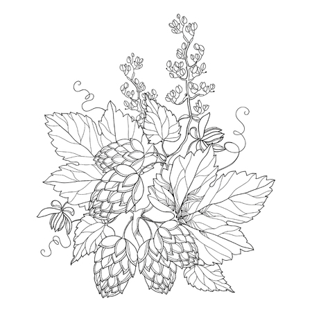 humulus: stem with ornate Hops or Humulus. Cones and leaves in black isolated on white. Outline Hops for beer and brewery decor. Organic elements in contour style for coloring book and design.