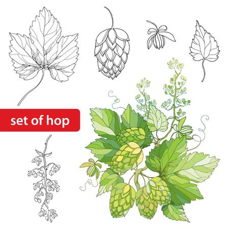 set con ornato luppolo o Humulus. Coni, foglie, ramo in nero isolato su sfondo bianco. Outline Luppolo per la decorazione birra e birreria. Elementi con luppolo in stile contorno per la progettazione organica.