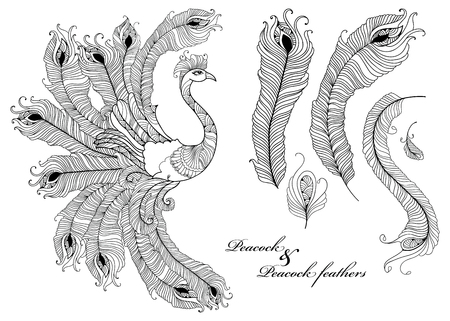 peafowl: set with ornate peacock and peacock feathers in black isolated on white background. Ornamental bird and outline feathers for coloring book. Decorative elements in contour style for design. Illustration