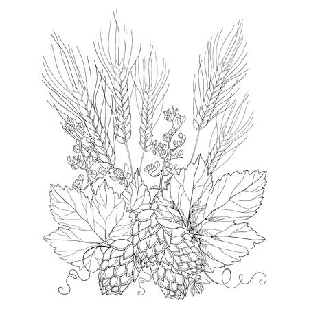 hops: stem with ornate Hops and barley ears. Outline barley and hops in black isolated on white. Contour Hops and barley for beer and brewery decor. Beer elements in contour style for coloring book.