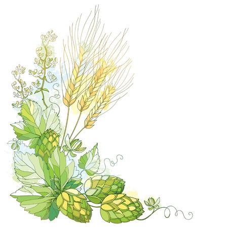 stelo con luppolo decorati e spighe di orzo. Orzo, foglie e luppolo a pastello isolato su bianco. Contour luppolo e orzo per la decorazione della birra e il birrificio. Elementi birra in stile contorno per la progettazione fabbrica di birra