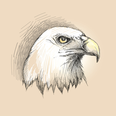 birds eye view: sketch of bald eagle head profile in black on the beige background. Design element with eagle for USA Independence Day or July fourth. Decor with Eagle for greeting cards, banners or templates. Illustration
