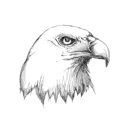 stated: sketch of bald eagle head profile in black isolated on white. Design element for United Stated Independence Day or July fourth. Decor with Eagle for greeting cards, banners or templates.