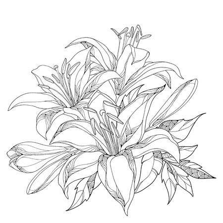 composition book: Vector bouquet with ornate white Lily flower, buds and leaves in black isolated on white. Round composition with lilies. Floral elements in contour style for summer design and coloring book.