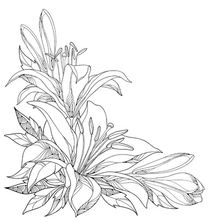 Vector bouquet with ornate white Lily flower, buds and leaves in black isolated on white. Corner composition with lilies. Floral elements in contour style for summer design and coloring book.