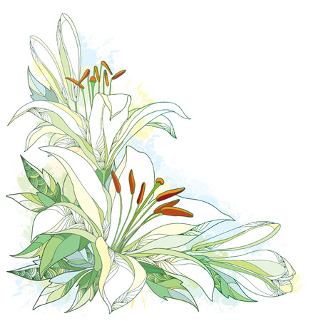 Vector bouquet with ornate white Lily flower, buds and leaves isolated on white background with blots in pastel. Corner composition with lilies. Floral background in contour style for summer design.