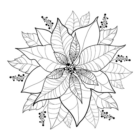 Vector Poinsettia flower or Christmas Star in black isolated on white. Outline flower and leaves of Poinsettia for Christmas design and coloring book. Traditional Christmas and Happy New Year symbol.