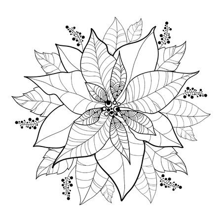 flor de pascua: vector de la flor Poinsettia o estrella de Navidad aislado en negro sobre blanco. Esquema de la flor y las hojas del Poinsettia para el diseño de Navidad y libro para colorear. Navidad tradicional y símbolo de feliz año nuevo.