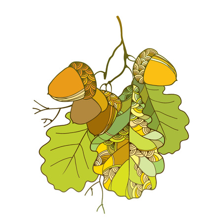 Vector branch with ornate oak green leaves and five acorns isolated on white background. Stem with outline oak leaf and acorn for September decor. Floral elements in contour style for autumn design.