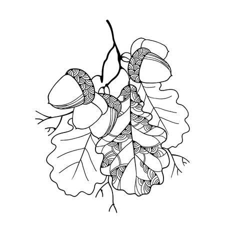 Vector branch with ornate oak leaves and five acorns isolated on white. Stem with outline oak leaf and acorn for September decor. Floral elements in contour style for autumn design and coloring book. Stock Illustratie