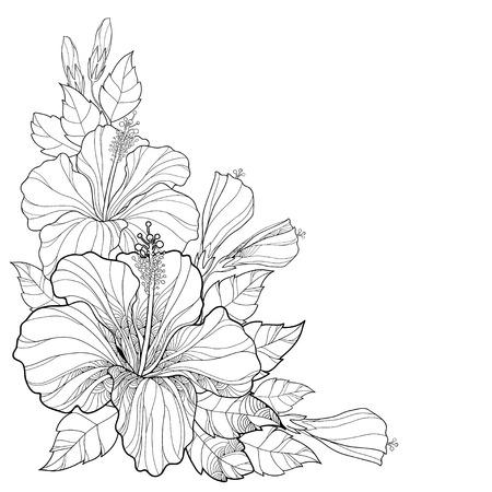 Vector el ramo con el hibisco chino o Hibiscus rosa-sinensis. Flor, brote y hojas aisladas. Composición de la esquina con el hibisco. elementos florales en el estilo de contorno para el diseño de verano y para dar color.