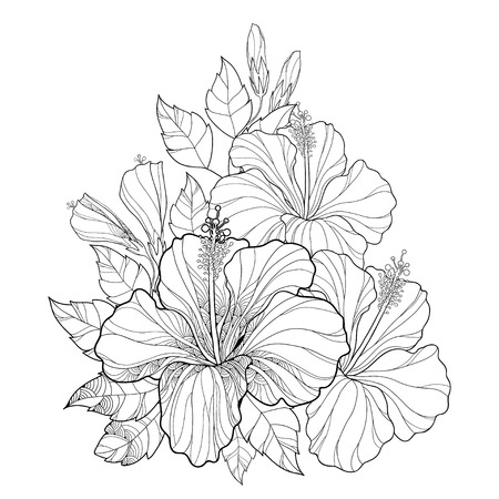 Vector bouquet with Chinese Hibiscus or Hibiscus rosa-sinensis. Flower, bud and leaves isolated. Round composition with Hibiscus. Floral elements in contour style for summer design and coloring book. Ilustração