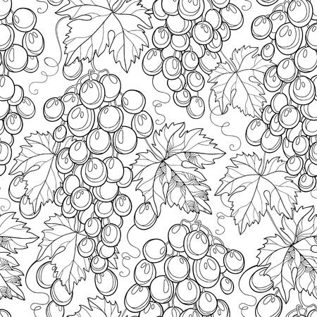 Vector Bos Van Druif Sierlijke Druivenbladeren En Wijnglas In Het
