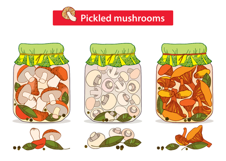 mycology: Vector set with pickled orange-cap boletus, chanterelles and champignons mushroom in glass jar with bay leaf and black pepper in contour style isolated on white. Illustration