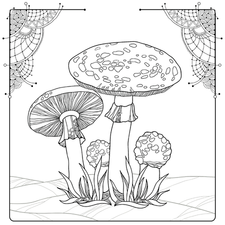 agaric: Vector composition with Amanita or Fly agaric mushroom isolated on white. Outline poisonous red-cup mushroom in line art decor.